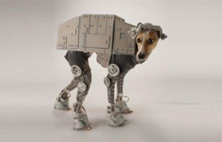 Kostým pre psa