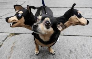psie kostými - oblečky