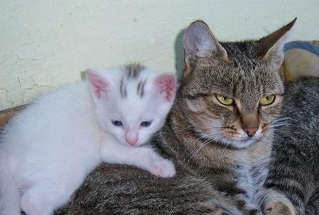 Mačka a mačiatko
