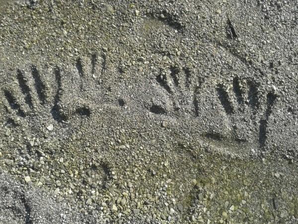 fingerprint-414292_1280