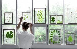 framed-leaves