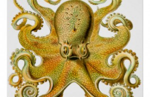 vintage_ernst_haeckel_octopus_in_yellow_poster-r100fe7bb56b3491a8162b71fbe156653_aiz5x_8byvr_324