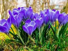 marec v zahrade