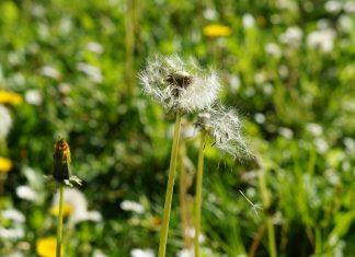 alergia na pel