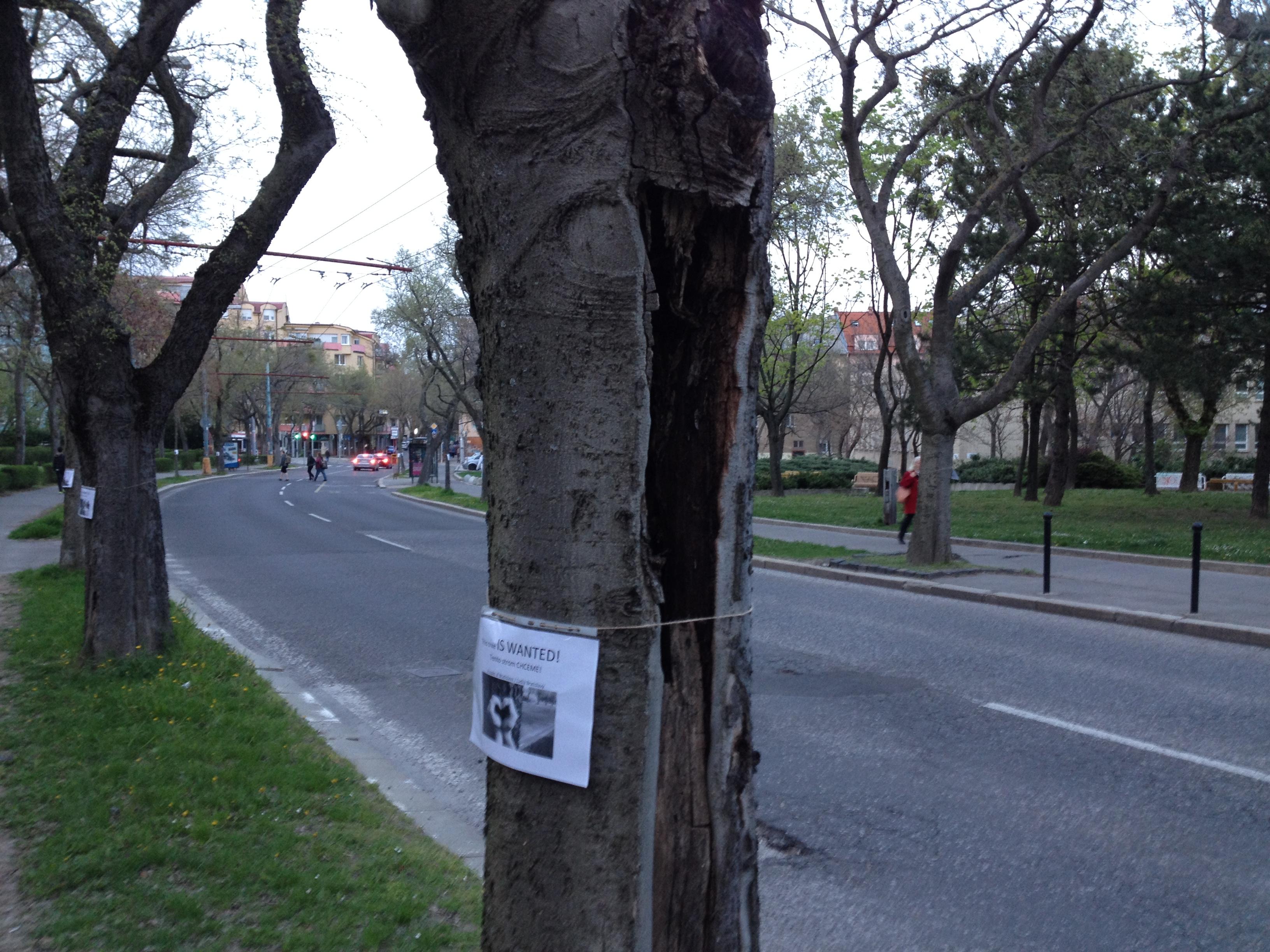 chore-stromy-bratislava