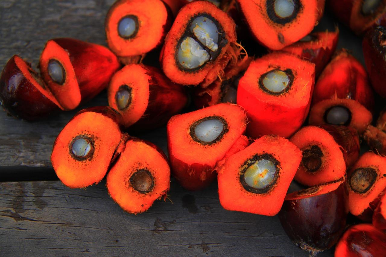 palmový olej 2