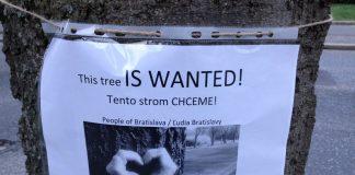 vyrub-stromov-bratislava