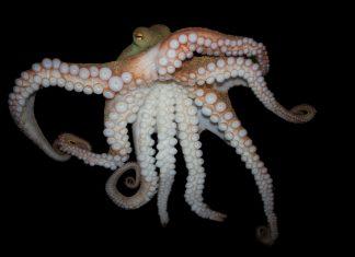 09_chobotnica