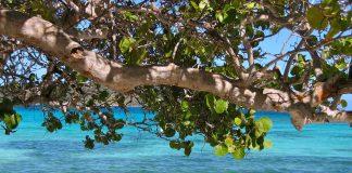 strom smrti