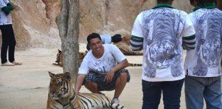 fotka s tigrom