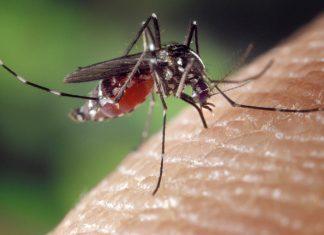 Vírus zika na Floride