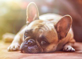 prečo si zaobstarať psa