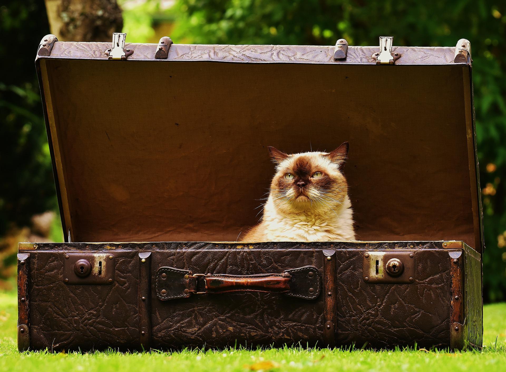 luggage-1643010_1920