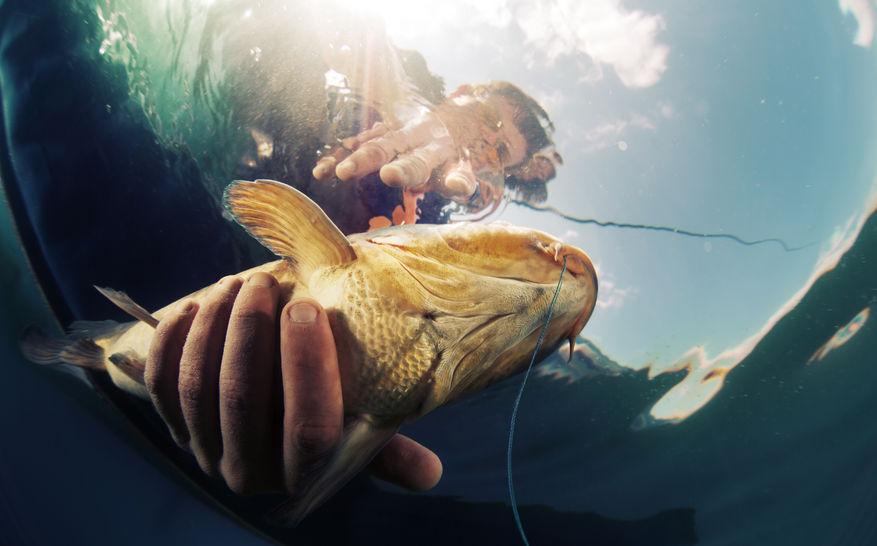 42486354 - underwater shot of the fisherman holding the fish