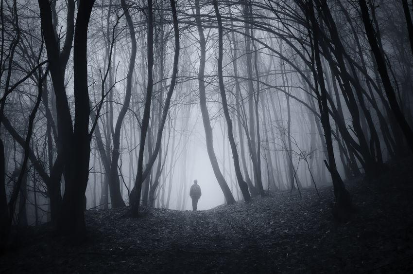 37365937 - man walking on road in dark fantasy horror halloween forest with fog