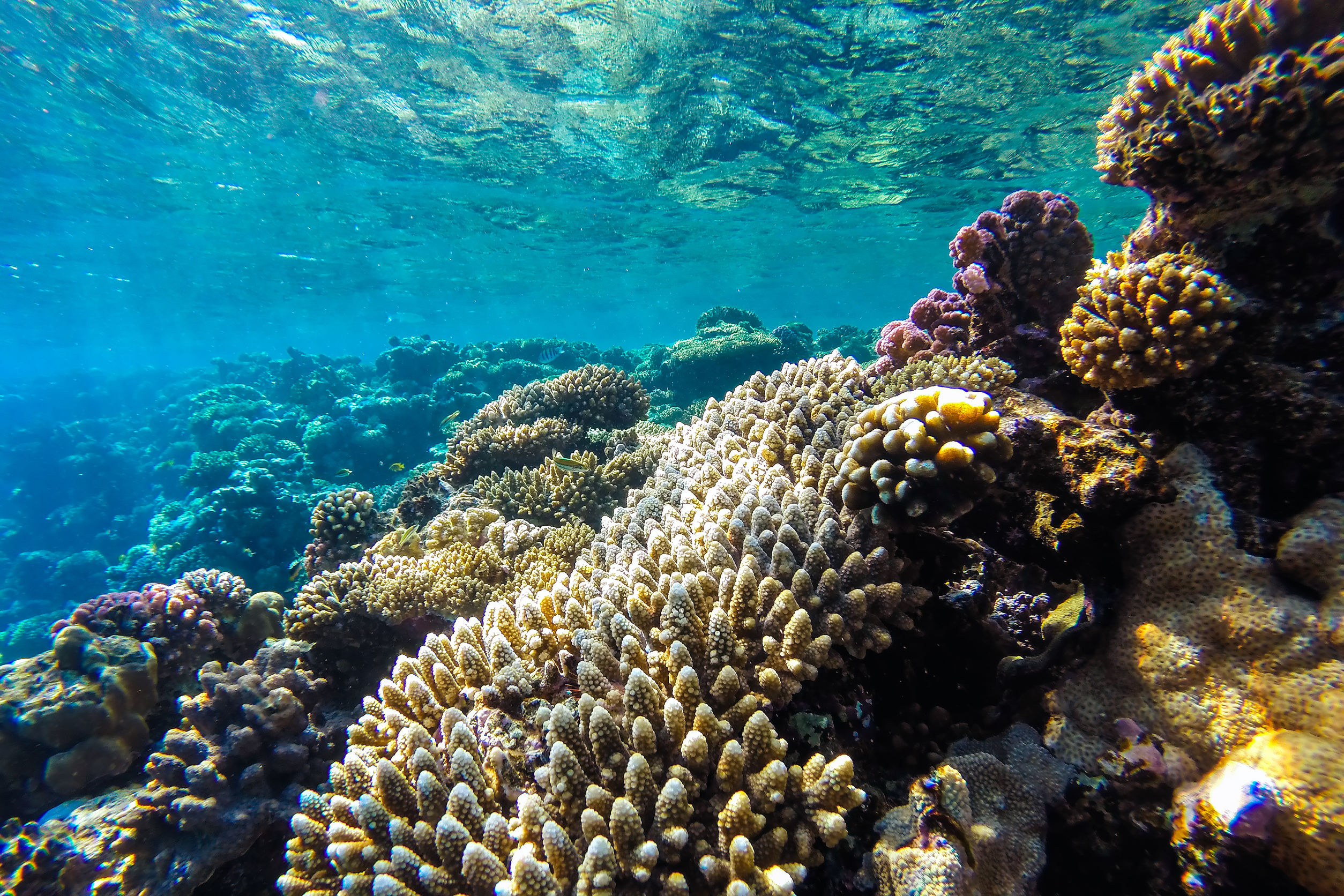 43548509 - red sea coral reef with hard corals, fishes and sunny sky shining through clean water - underwater photo