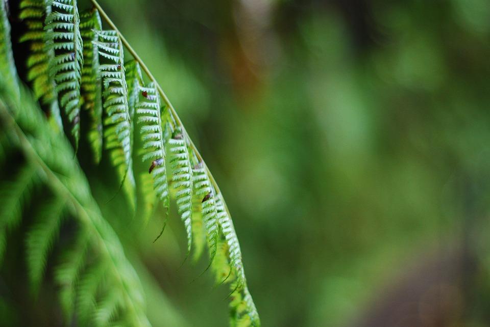 greenery-1565030_960_720