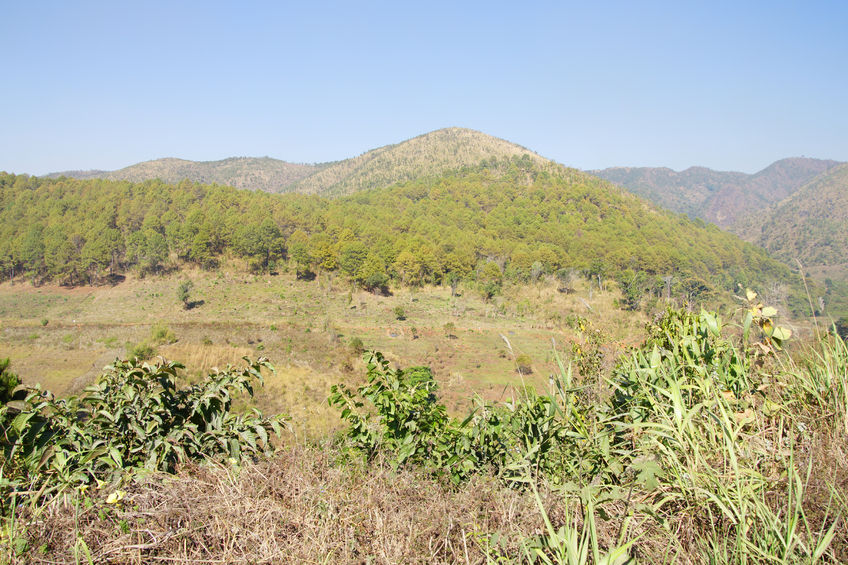 40259950 - scrub jungle mountains and forest near kalaw, myanmar (burma)