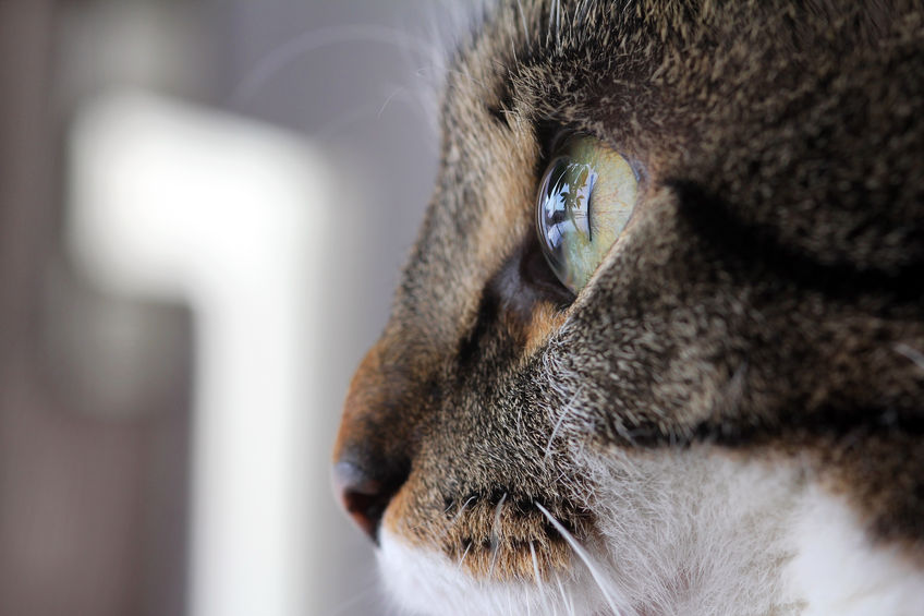 39982210 - close up of the eye of a cat from the side