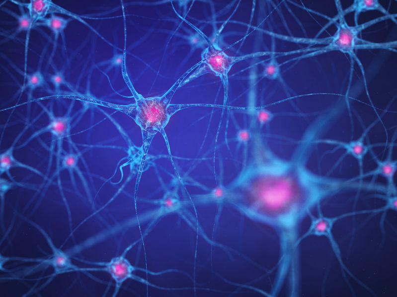 50901441 - neural network , brain cells , human nervous system , neurons