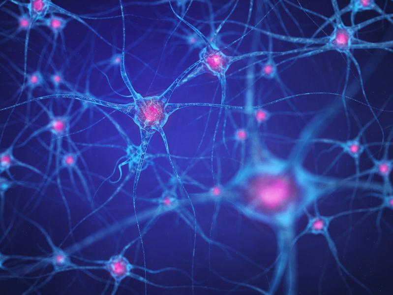 50901441 - neural network , brain cells , human nervous system , neurons