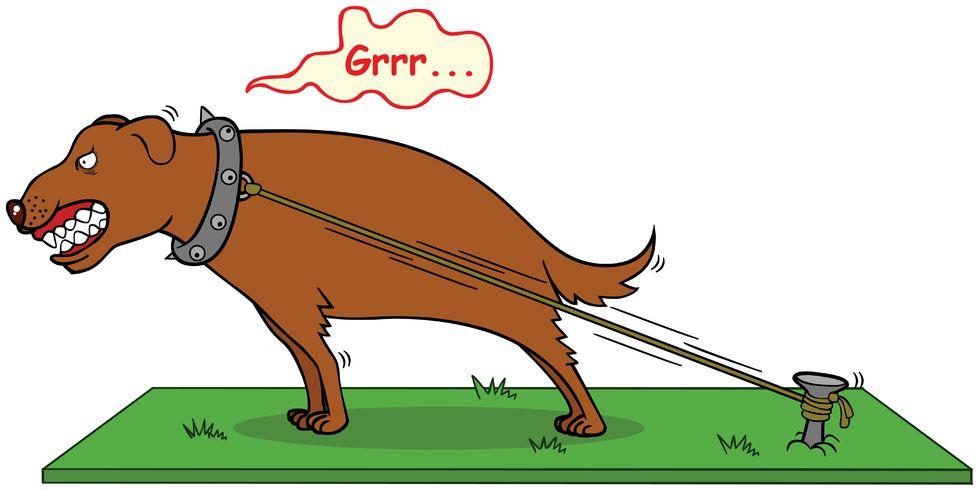 17925226 - barking dog never bite