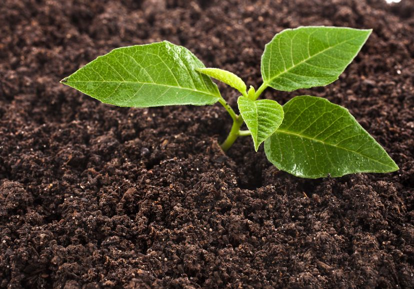 20509390 - seedling green plant surface top view textured background