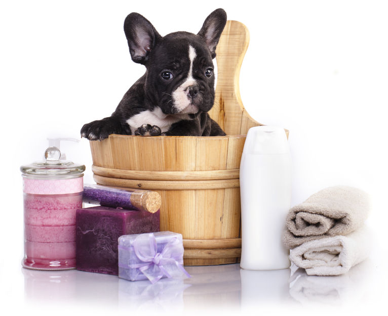 43958815 - puppy bath time - french bulldog puppy in wooden wash basin with soap suds
