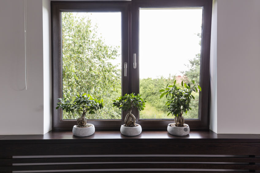 60845309 - window with brown wooden frame, three bonsai trees in white pots standing on a brown window sill