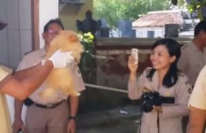 Bali Vraždenie psov