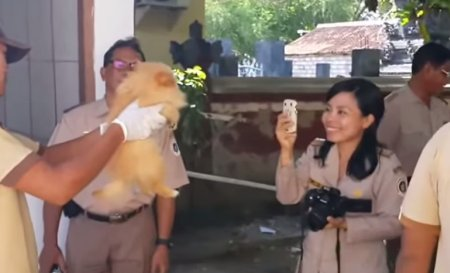 Na Bali popravují pejsky jako na běžícím pásu. S úsměvem!