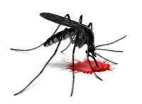 Komáre