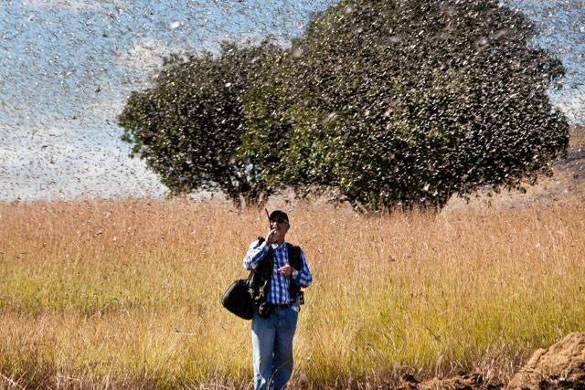 útiok kobyliek na Madagascare, zdroj fao.org