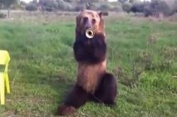 Maco medveď trúbka