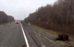 Havária s medveďom v Rusku