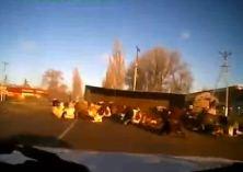 Nehoda v Rusku, kravy na ceste