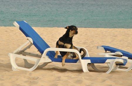 Pes a cestovanie, © Tomáš