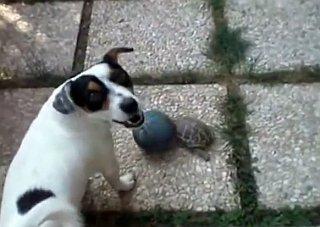 Pes lopta a korytnačka